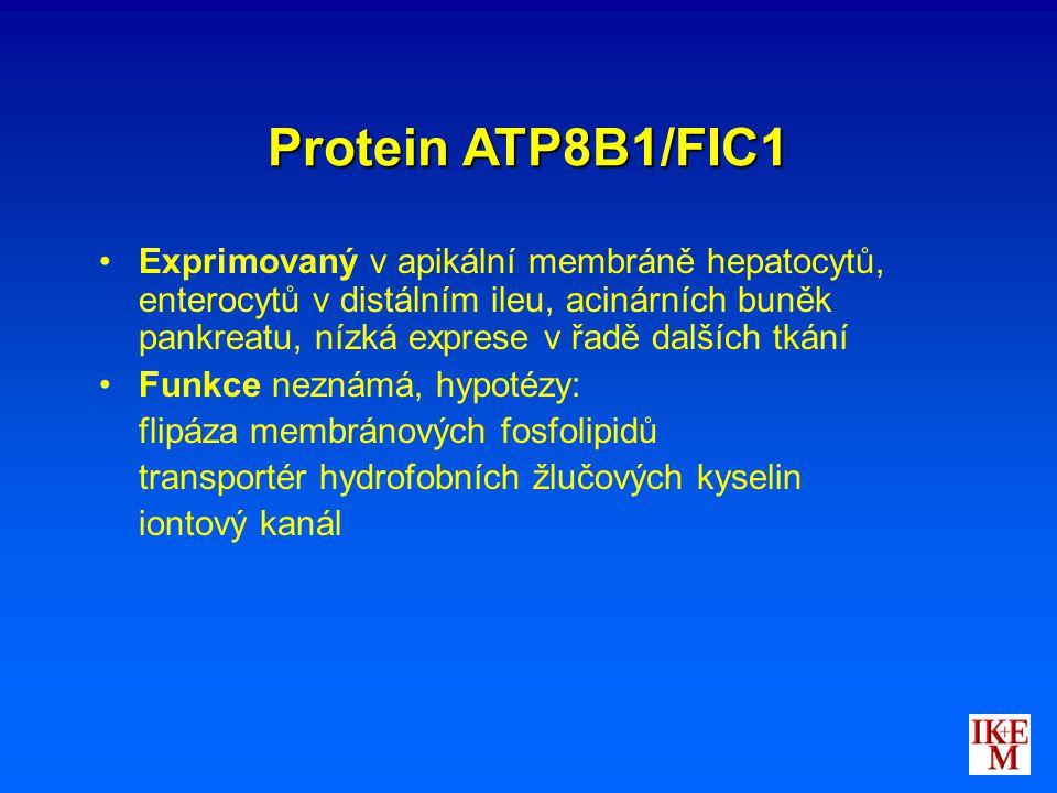 Protein ATP8B1/FIC1 Exprimovaný v apikální membráně hepatocytů, enterocytů v distálním ileu, acinárních buněk pankreatu, nízká exprese v řadě dalších