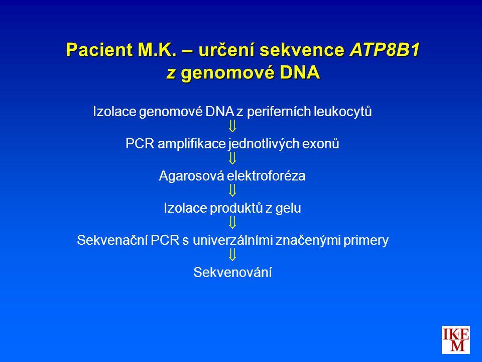 Pacient M.K. – určení sekvence ATP8B1 z genomové DNA Izolace genomové DNA z periferních leukocytů  PCR amplifikace jednotlivých exonů  Agarosová ele