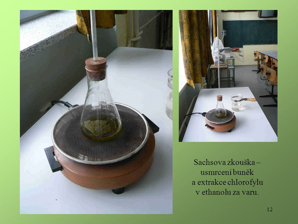 12 Sachsova zkouška – usmrcení buněk a extrakce chlorofylu v ethanolu za varu.