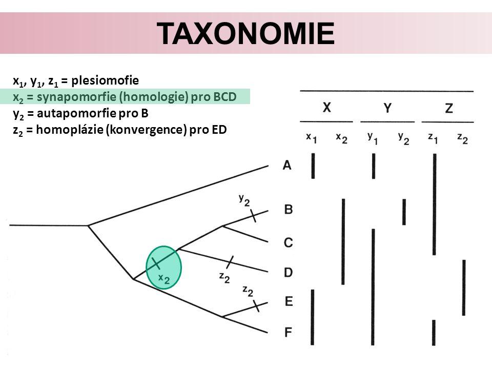 TAXONOMIE x 1, y 1, z 1 = plesiomofie x 2 = synapomorfie (homologie) pro BCD y 2 = autapomorfie pro B z 2 = homoplázie (konvergence) pro ED