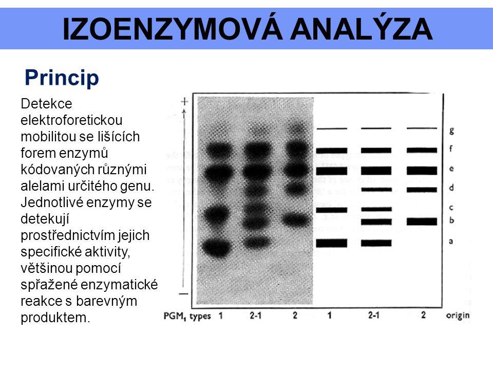 Detekce elektroforetickou mobilitou se lišících forem enzymů kódovaných různými alelami určitého genu. Jednotlivé enzymy se detekují prostřednictvím j