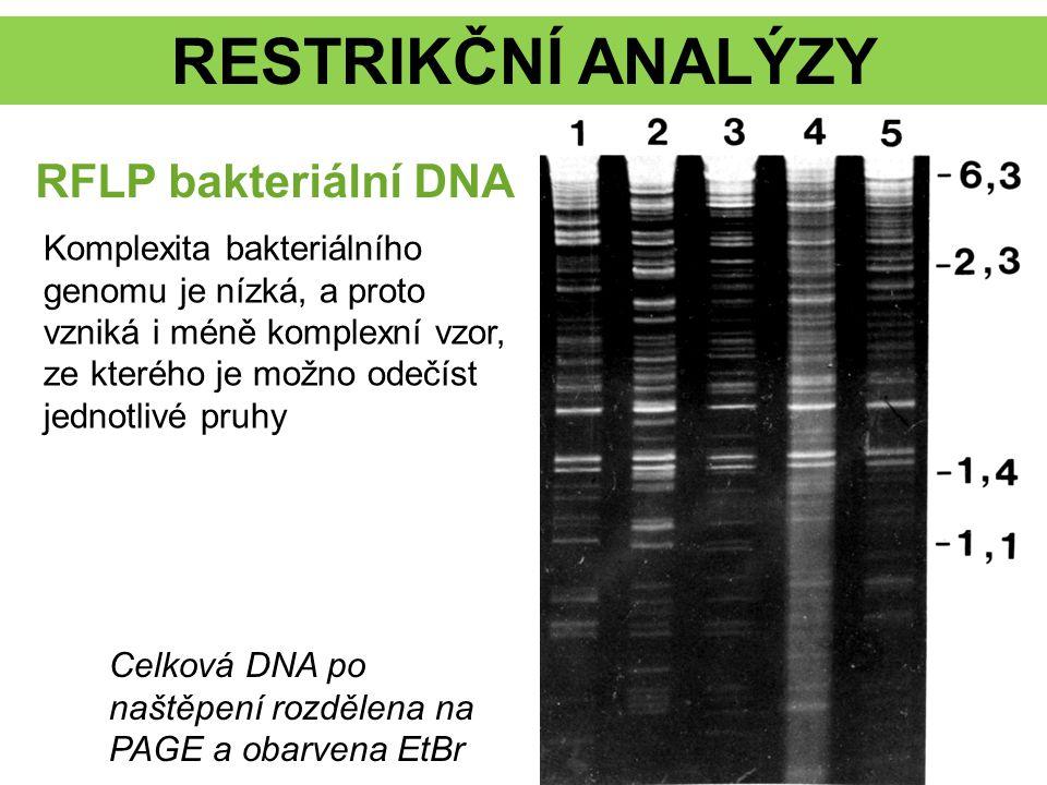 RESTRIKČNÍ ANALÝZY Celková DNA po naštěpení rozdělena na PAGE a obarvena EtBr RFLP bakteriální DNA Komplexita bakteriálního genomu je nízká, a proto v
