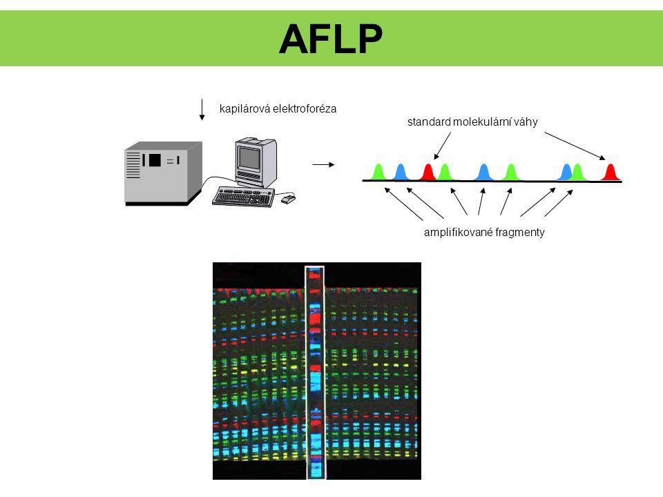 AFLP kapilárová elektroforéza standard molekulární váhy amplifikované fragmenty