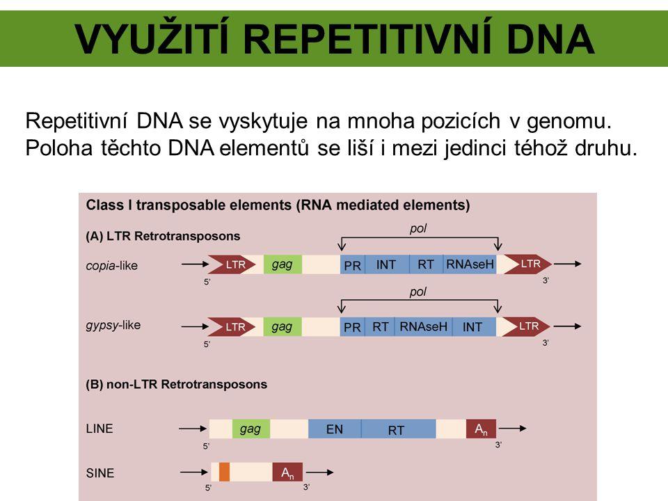 VYUŽITÍ REPETITIVNÍ DNA Repetitivní DNA se vyskytuje na mnoha pozicích v genomu. Poloha těchto DNA elementů se liší i mezi jedinci téhož druhu.