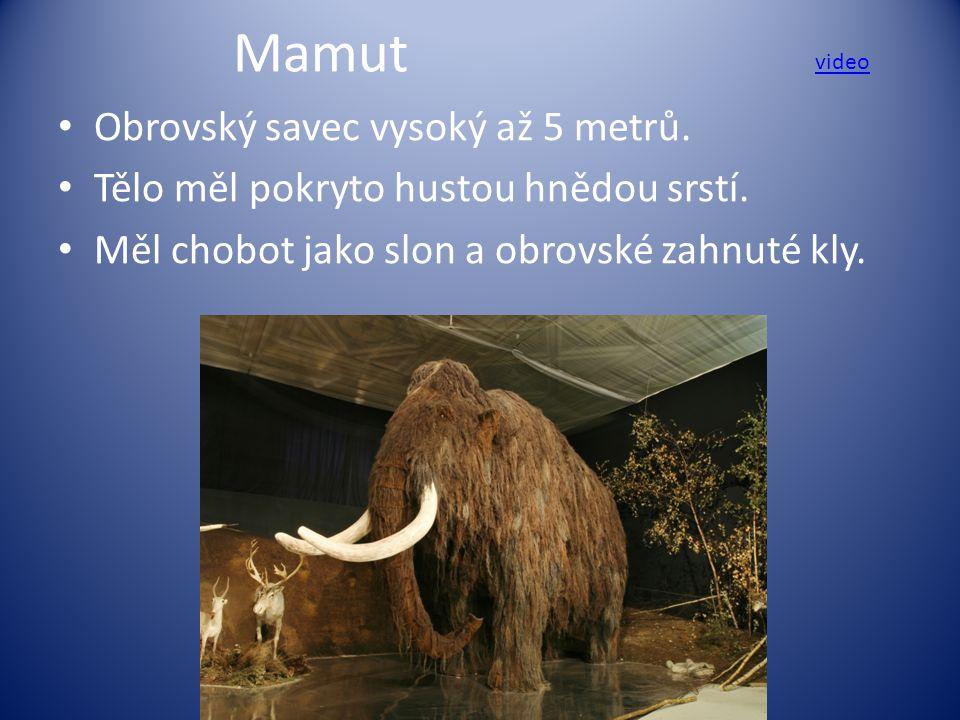 Mamut Obrovský savec vysoký až 5 metrů. Tělo měl pokryto hustou hnědou srstí. Měl chobot jako slon a obrovské zahnuté kly. video