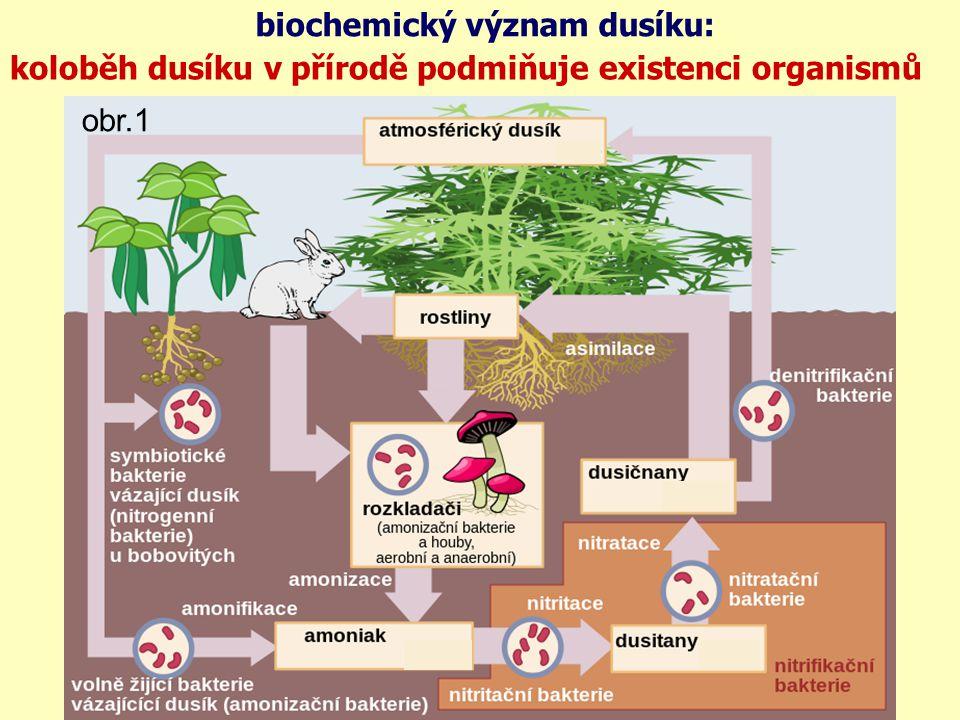 biochemický význam dusíku: koloběh dusíku v přírodě podmiňuje existenci organismů obr.1