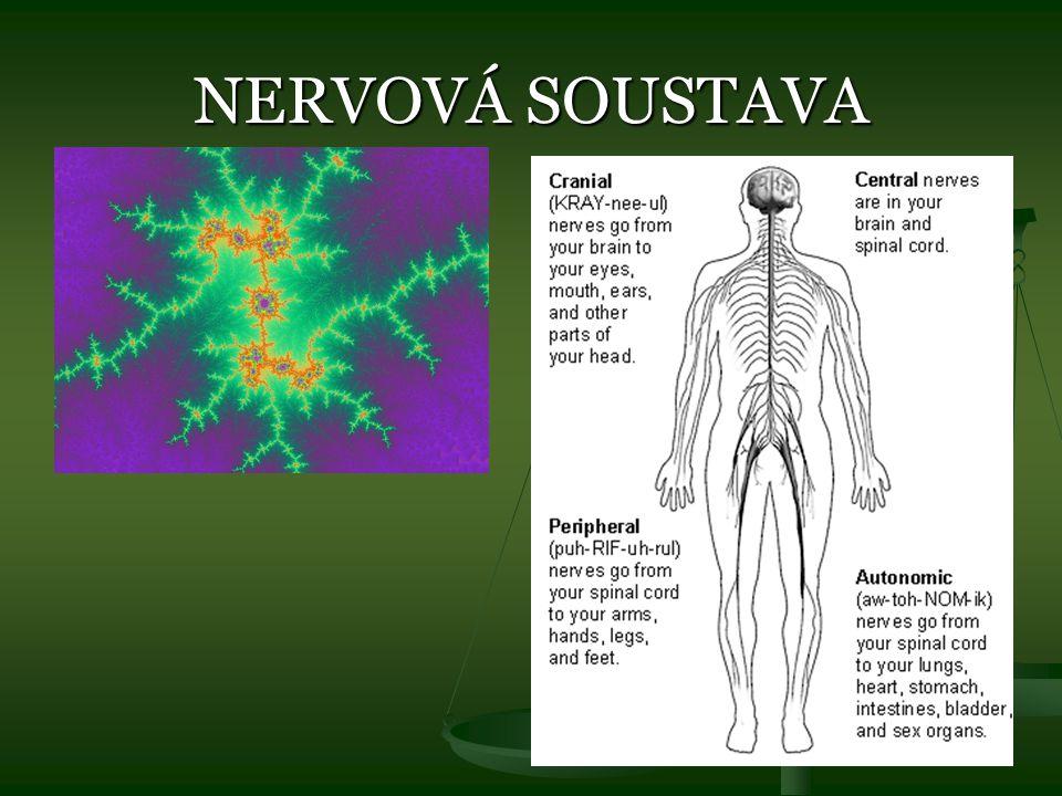 TOXICITA HYPNOTIK Zpomalují reakce Zpomalují reakce Utlumují aktivitu mozku Utlumují aktivitu mozku Způsobují problémy s mluvením Způsobují problémy s mluvením Vyvolávají ztrátu rovnováhy, třes, halucinace, úzkost Vyvolávají ztrátu rovnováhy, třes, halucinace, úzkost Dlouhodobé použití vyvolává psychickou i somatickou závislost (ne u antihistaminik) Dlouhodobé použití vyvolává psychickou i somatickou závislost (ne u antihistaminik) Nejnebezpečnější předávkování je u barbiturátů Nejnebezpečnější předávkování je u barbiturátů