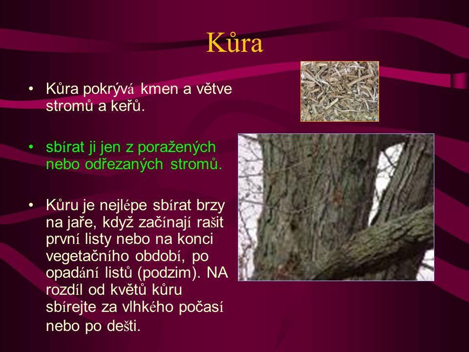 Kůra Kůra pokrýv á kmen a větve stromů a keřů.sb í rat ji jen z poražených nebo odřezaných stromů.