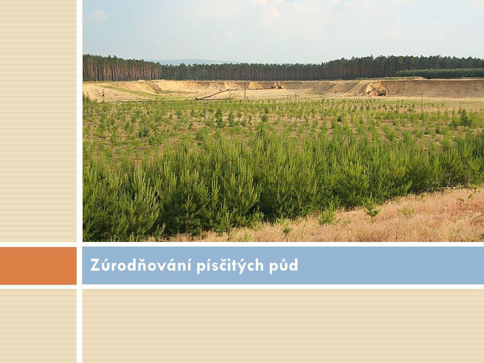 Zúrodňování písčitých půd