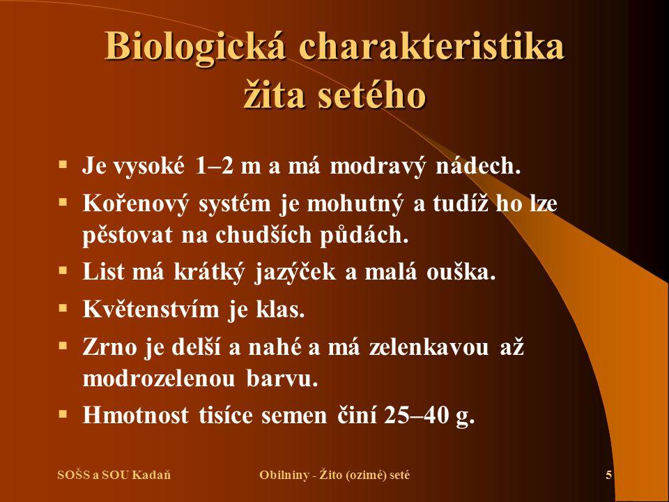 SOŠS a SOU KadaňObilniny - Žito (ozimé) seté5 Biologická charakteristika žita setého  Je vysoké 1–2 m a má modravý nádech.  Kořenový systém je mohut