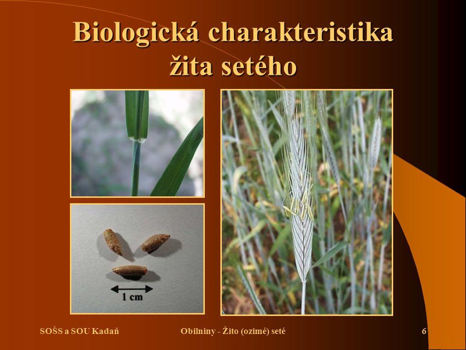 SOŠS a SOU KadaňObilniny - Žito (ozimé) seté6 Biologická charakteristika žita setého
