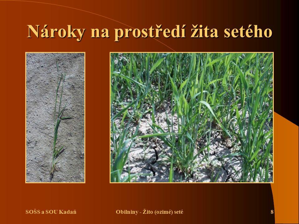 SOŠS a SOU KadaňObilniny - Žito (ozimé) seté8 Nároky na prostředí žita setého