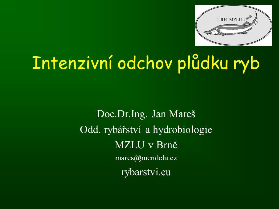 Intenzivní odchov plůdku ryb Doc.Dr.Ing. Jan Mareš Odd. rybářství a hydrobiologie MZLU v Brně mares@mendelu.cz rybarstvi.eu