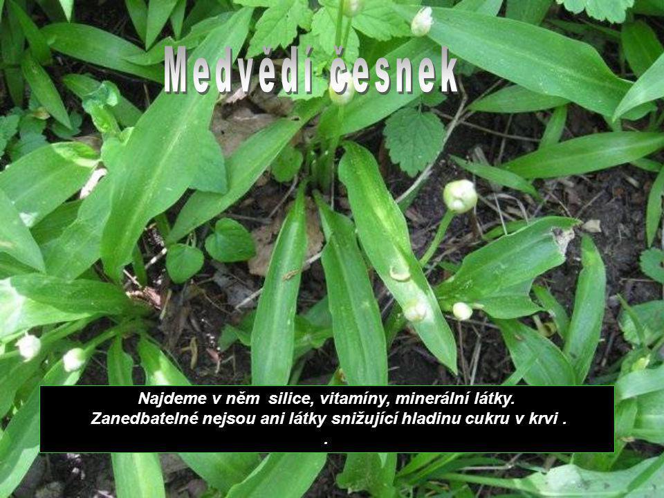 Květ černého bezu je vynikající potopudnou rostlinou.
