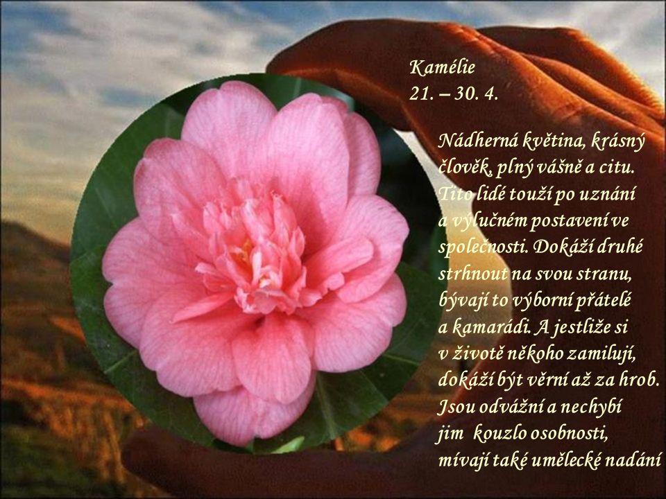 Šeřík 11. – 20. 4. Kouzelný keř, krásná voňavá květina, která dokáže svojí vůní omámit. Člověk v tomto květinovém znamení bývá plný energie a radosti
