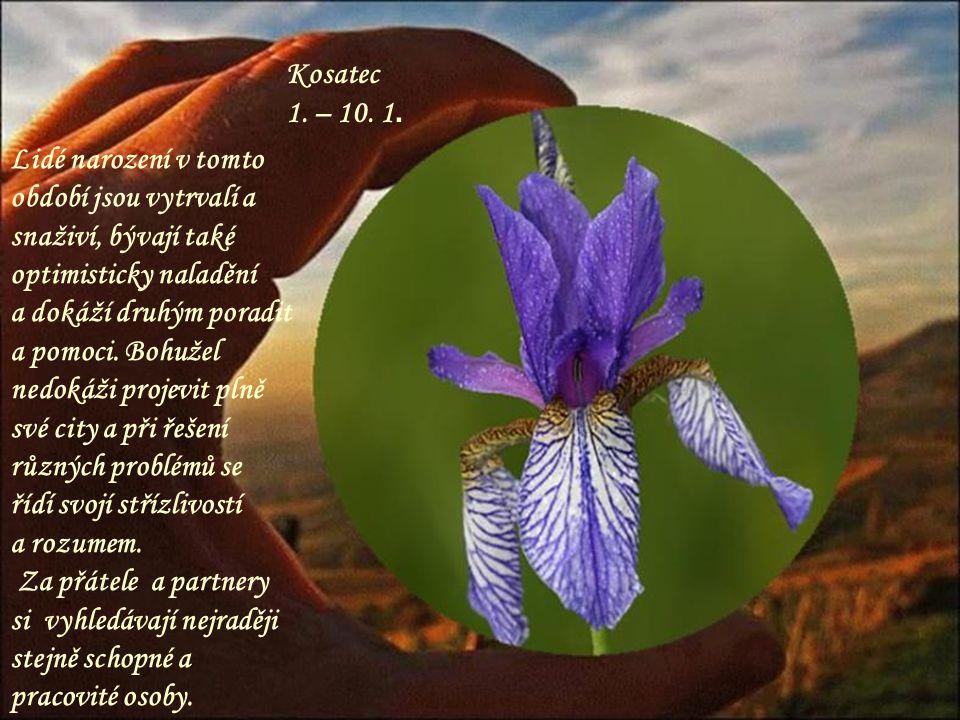Šeřík 11.– 20. 4. Kouzelný keř, krásná voňavá květina, která dokáže svojí vůní omámit.