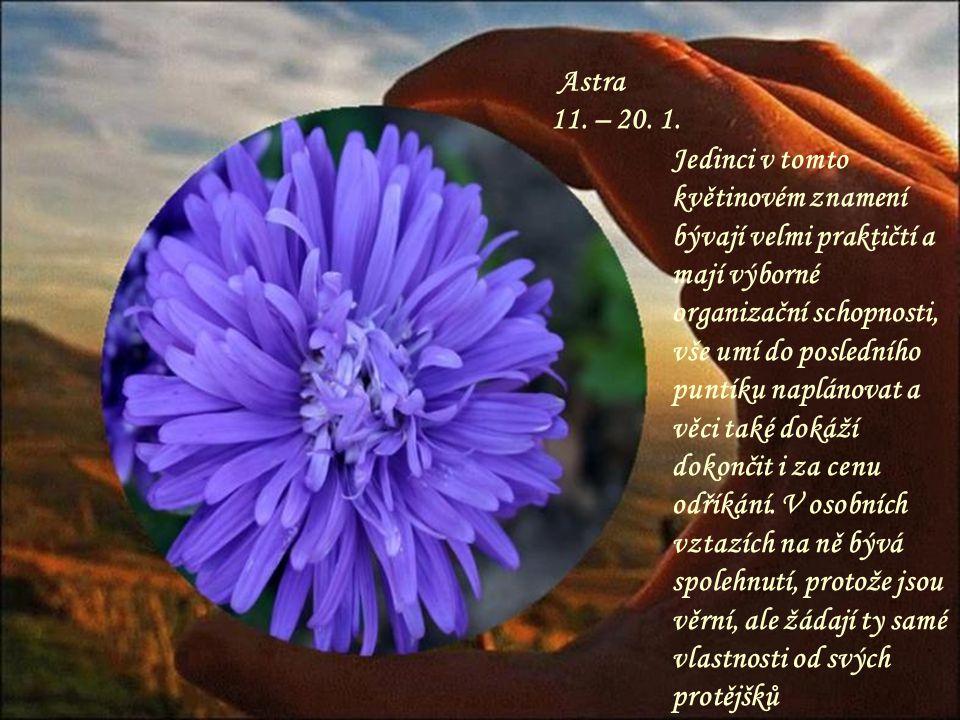 Kamélie 21.– 30. 4. Nádherná květina, krásný člověk, plný vášně a citu.