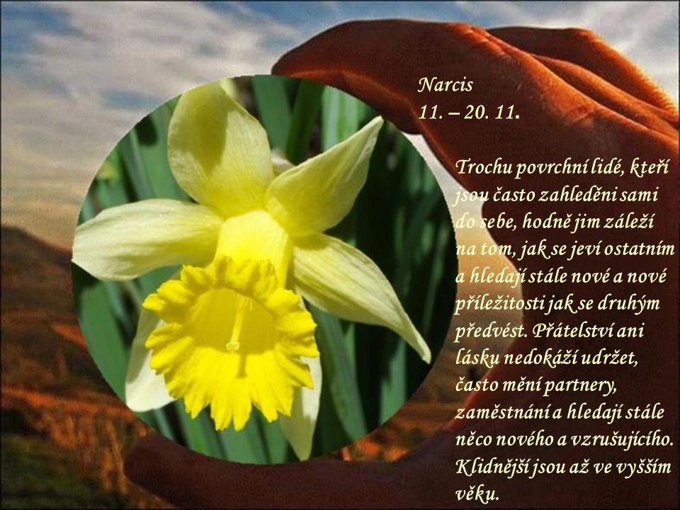 Chryzantéma 1. – 10. 11. Trochu náladová osoba, která má v životě velké cíle, základním úkolem člověka v tomto znamení je naučit se trpělivosti a lásc