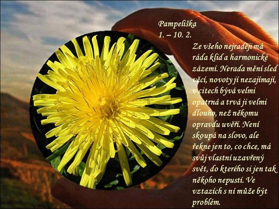 Konvalinka 11.– 21. 5. Roztomilá květinka, kterou má každý rád.