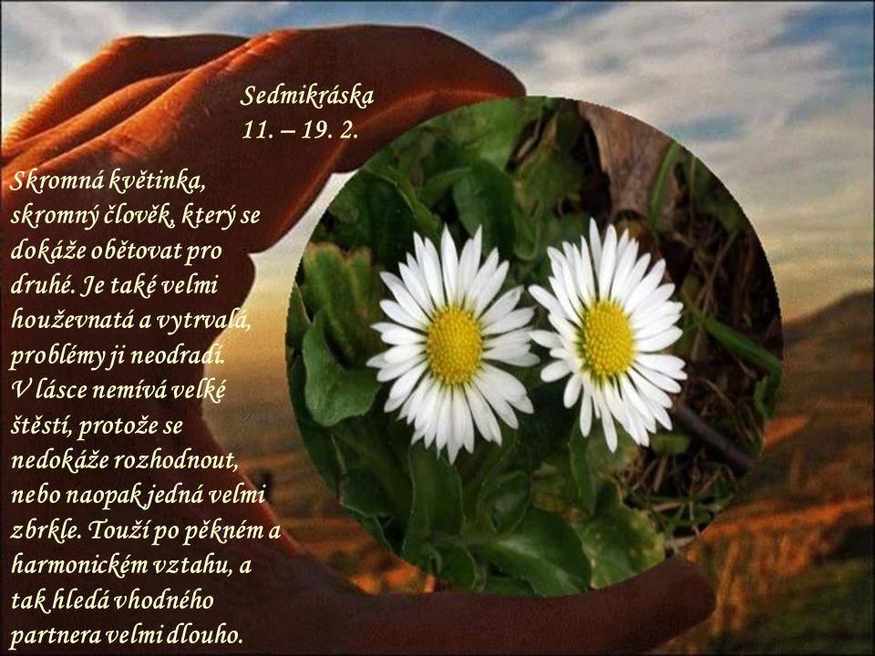Sedmikráska 11.– 19. 2. Skromná květinka, skromný člověk, který se dokáže obětovat pro druhé.