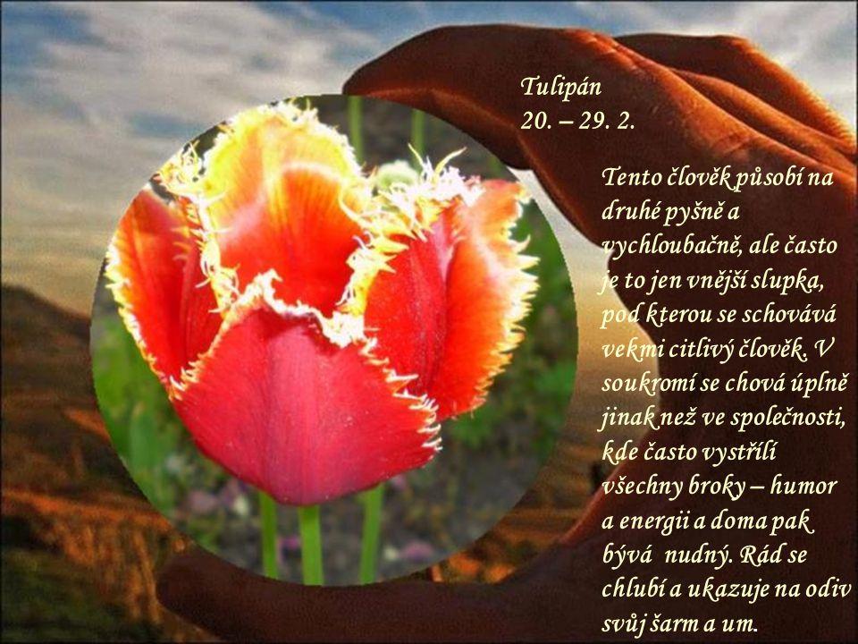 Sedmikráska 11. – 19. 2. Skromná květinka, skromný člověk, který se dokáže obětovat pro druhé. Je také velmi houževnatá a vytrvalá, problémy ji neodra