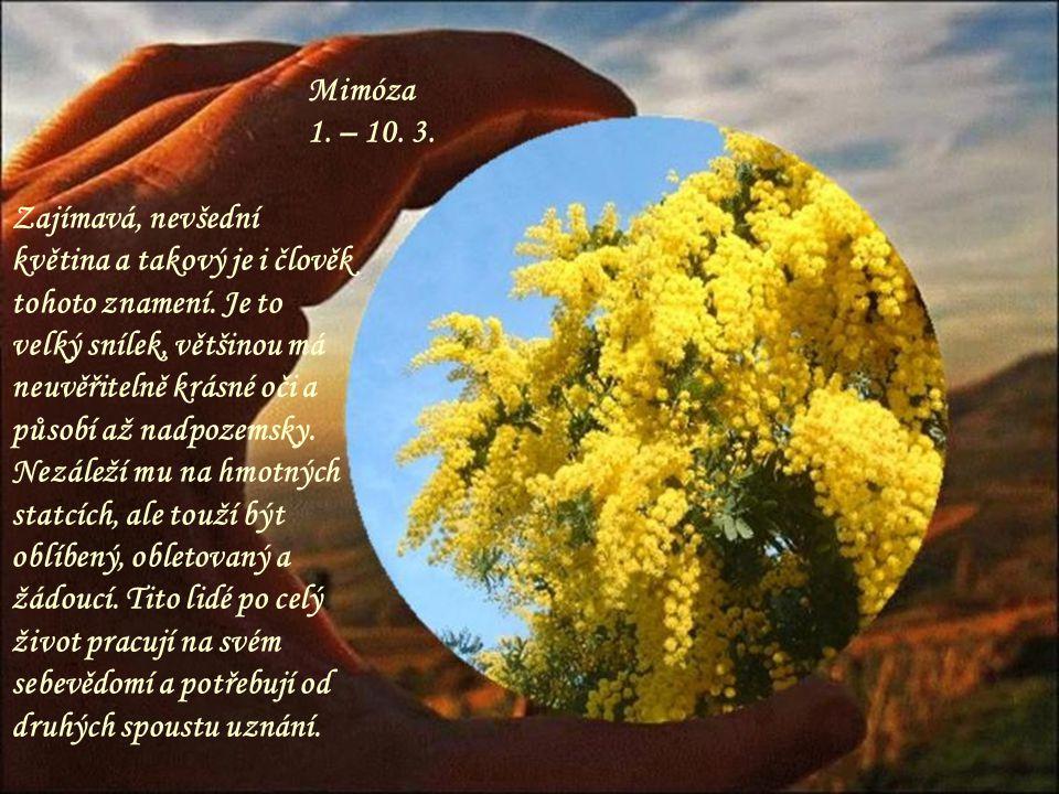 Mimóza 1.– 10. 3. Zajímavá, nevšední květina a takový je i člověk tohoto znamení.