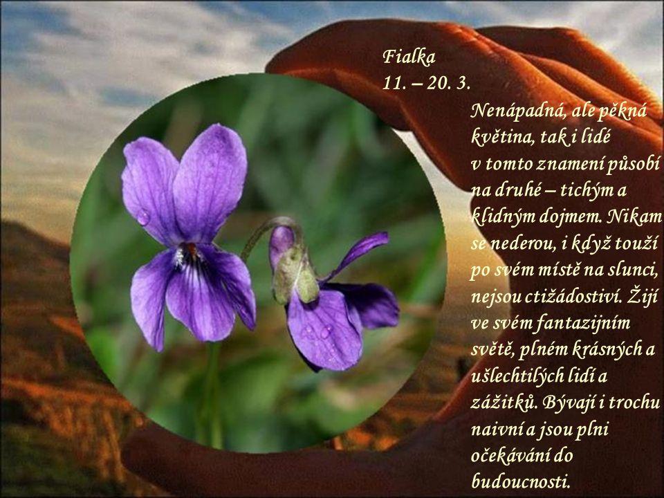 Mimóza 1. – 10. 3. Zajímavá, nevšední květina a takový je i člověk tohoto znamení. Je to velký snílek, většinou má neuvěřitelně krásné oči a působí až