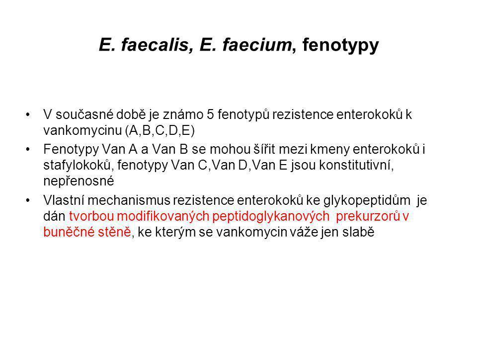 E. faecalis, E. faecium, fenotypy V současné době je známo 5 fenotypů rezistence enterokoků k vankomycinu (A,B,C,D,E) Fenotypy Van A a Van B se mohou
