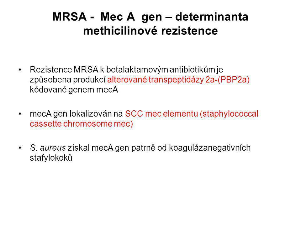 MRSA - Mec A gen – determinanta methicilinové rezistence Rezistence MRSA k betalaktamovým antibiotikům je způsobena produkcí alterované transpeptidázy