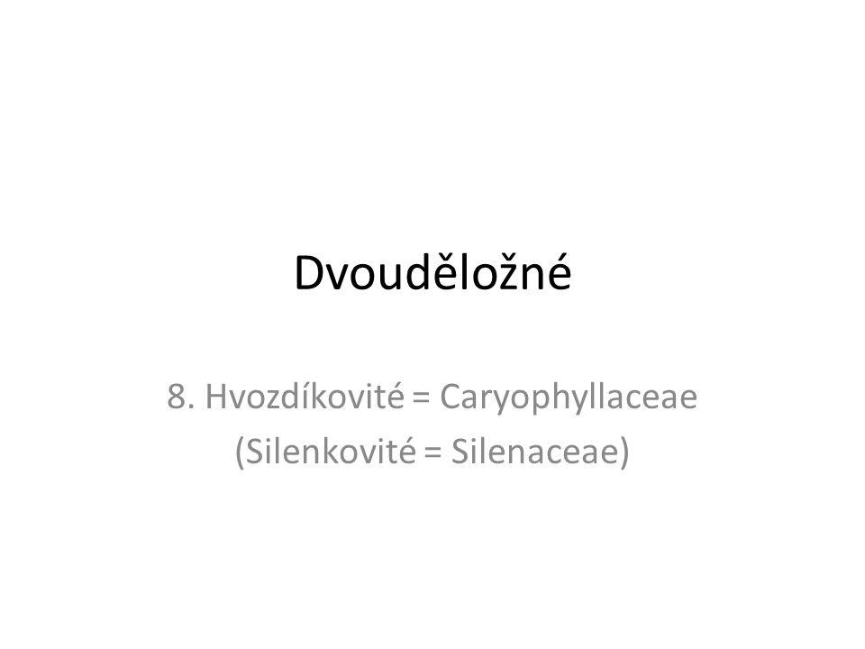 Dvouděložné 8. Hvozdíkovité = Caryophyllaceae (Silenkovité = Silenaceae)