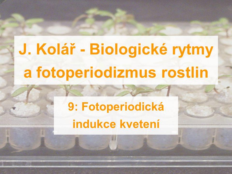 J. Kolář - Biologické rytmy a fotoperiodizmus rostlin 9: Fotoperiodická indukce kvetení