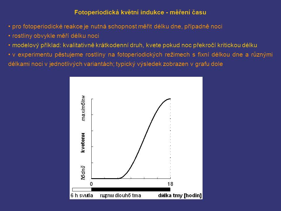 Fotoperiodická květní indukce - měření času pro fotoperiodické reakce je nutná schopnost měřit délku dne, případně noci rostliny obvykle měří délku no