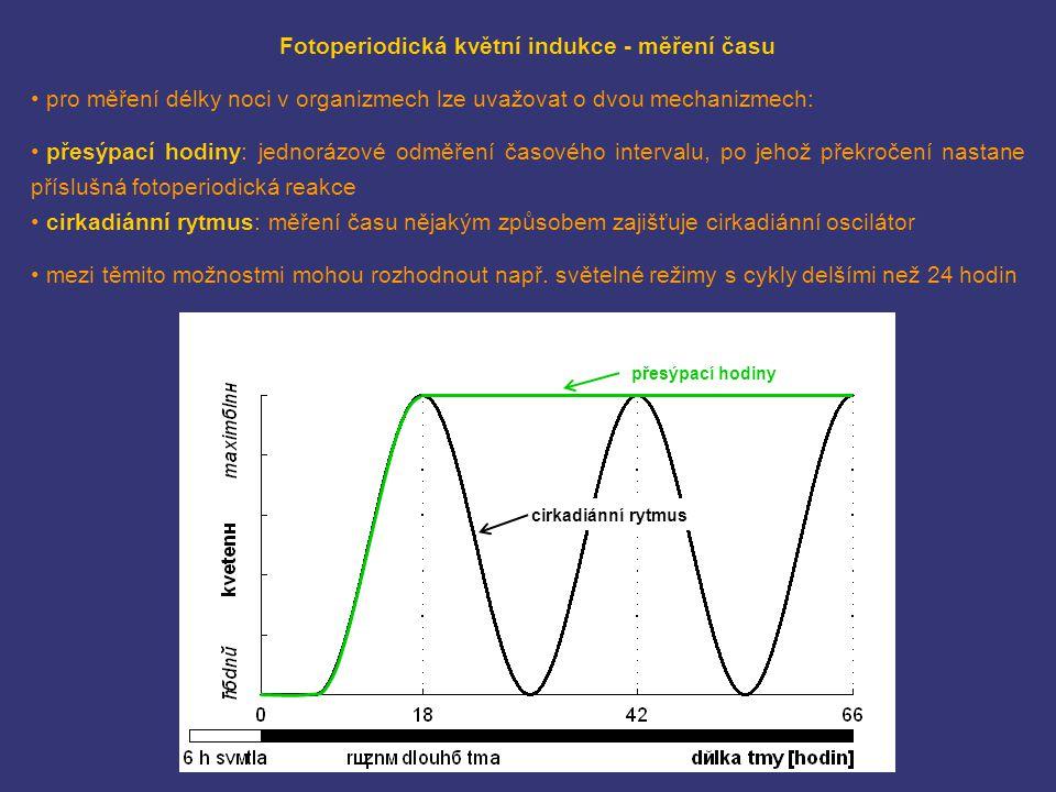 cirkadiánní rytmus Fotoperiodická květní indukce - měření času pro měření délky noci v organizmech lze uvažovat o dvou mechanizmech: přesýpací hodiny: