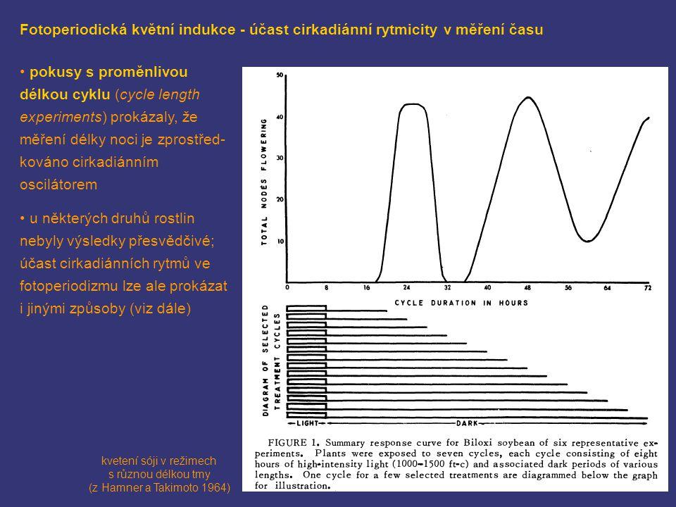 Fotoperiodická květní indukce - účast cirkadiánní rytmicity v měření času kvetení sóji v režimech s různou délkou tmy (z Hamner a Takimoto 1964) pokus