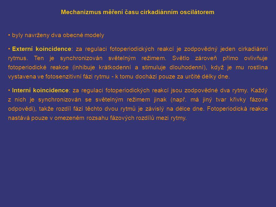 Mechanizmus měření času cirkadiánním oscilátorem byly navrženy dva obecné modely Externí koincidence: za regulaci fotoperiodických reakcí je zodpovědn