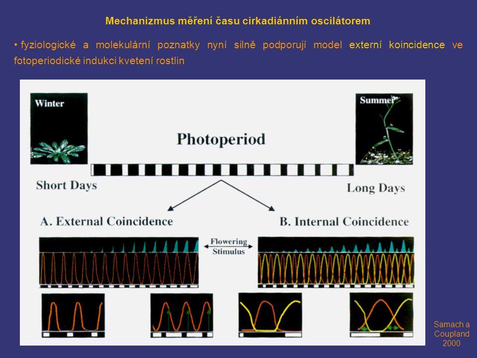 Mechanizmus měření času cirkadiánním oscilátorem fyziologické a molekulární poznatky nyní silně podporují model externí koincidence ve fotoperiodické