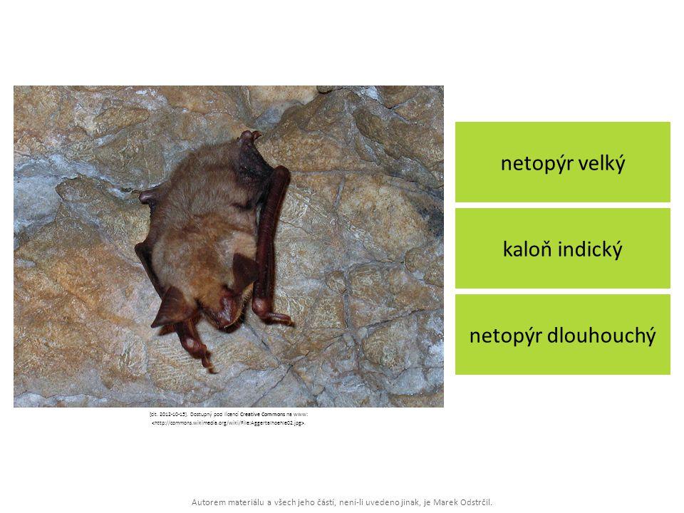 Autorem materiálu a všech jeho částí, není-li uvedeno jinak, je Marek Odstrčil. netopýr velký netopýr dlouhouchý kaloň indický [cit. 2012-10-15]. Dost