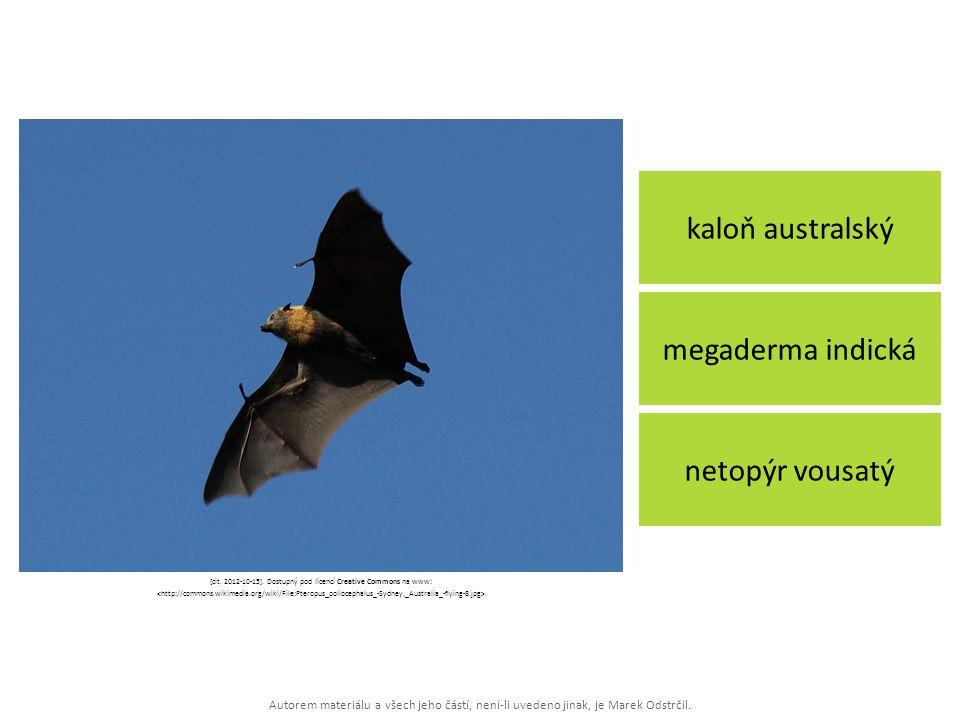 Autorem materiálu a všech jeho částí, není-li uvedeno jinak, je Marek Odstrčil. kaloň australský netopýr vousatý megaderma indická [cit. 2012-10-15].
