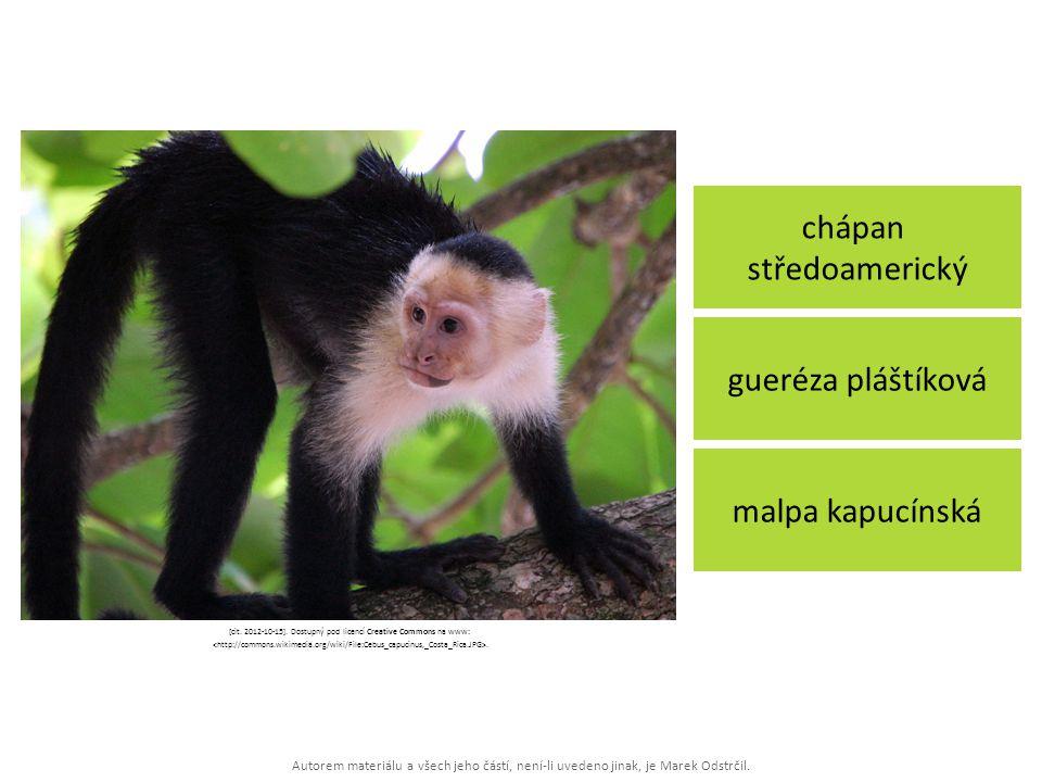 Autorem materiálu a všech jeho částí, není-li uvedeno jinak, je Marek Odstrčil. chápan středoamerický malpa kapucínská gueréza pláštíková [cit. 2012-1