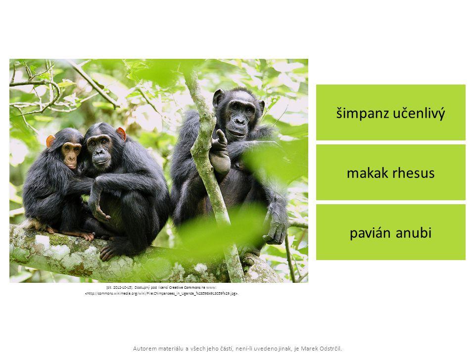 Autorem materiálu a všech jeho částí, není-li uvedeno jinak, je Marek Odstrčil. šimpanz učenlivý pavián anubi makak rhesus [cit. 2012-10-15]. Dostupný
