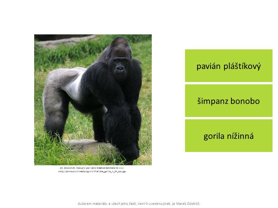 Autorem materiálu a všech jeho částí, není-li uvedeno jinak, je Marek Odstrčil. pavián pláštíkový gorila nížinná šimpanz bonobo [cit. 2012-10-15]. Dos