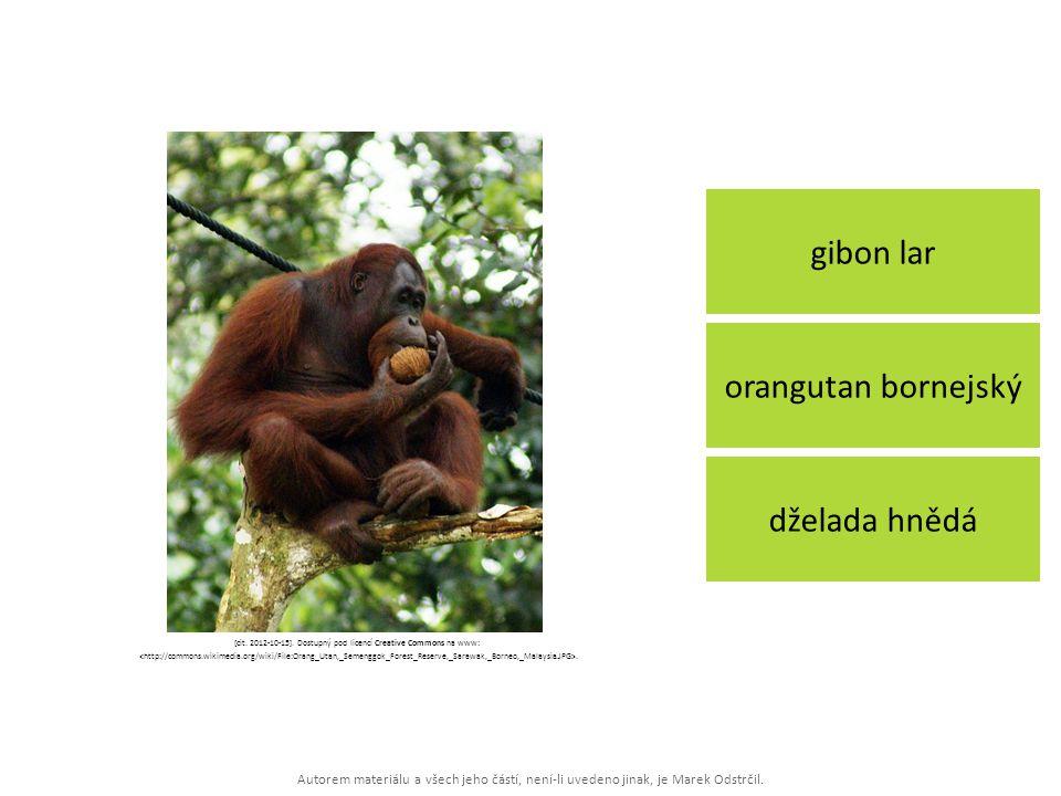 Autorem materiálu a všech jeho částí, není-li uvedeno jinak, je Marek Odstrčil. gibon lar dželada hnědá orangutan bornejský [cit. 2012-10-15]. Dostupn