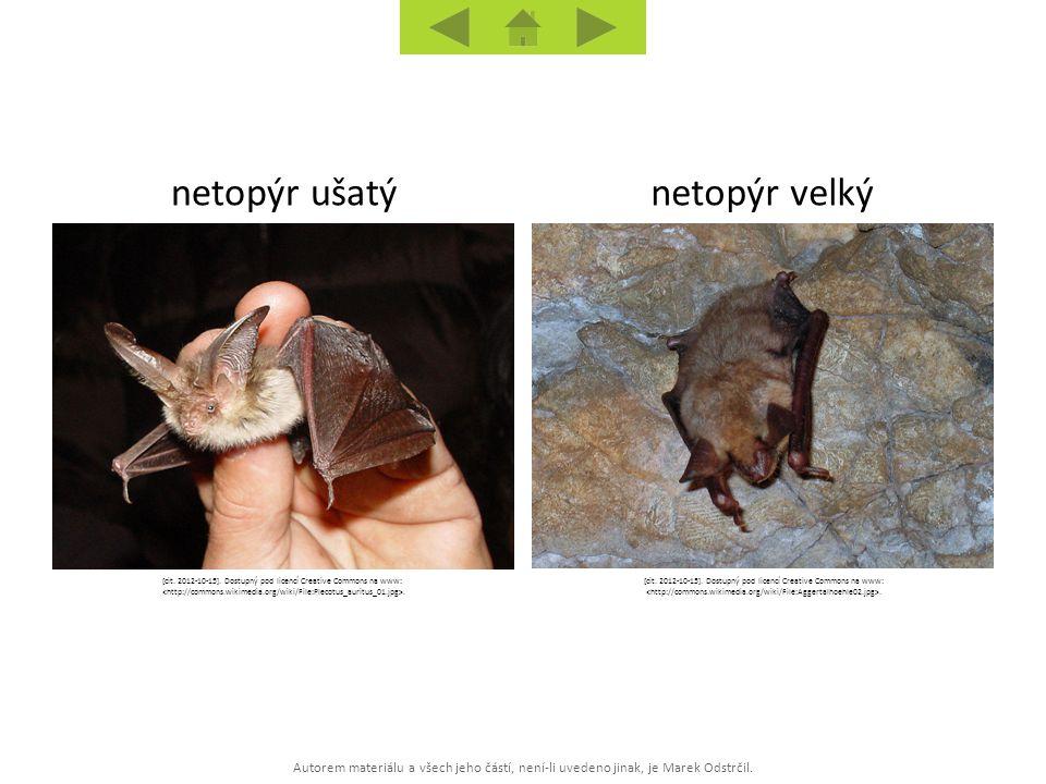 Autorem materiálu a všech jeho částí, není-li uvedeno jinak, je Marek Odstrčil. netopýr velkýnetopýr ušatý [cit. 2012-10-15]. Dostupný pod licencí Cre