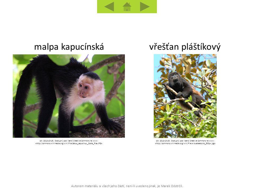 Autorem materiálu a všech jeho částí, není-li uvedeno jinak, je Marek Odstrčil. vřešťan pláštíkovýmalpa kapucínská [cit. 2012-10-15]. Dostupný pod lic