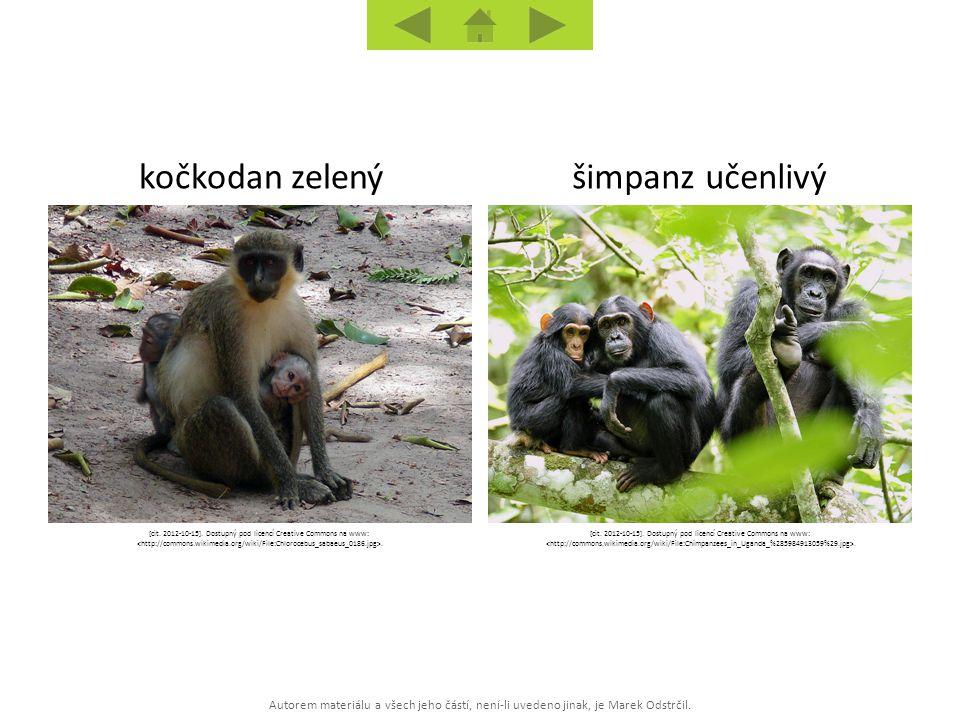 Autorem materiálu a všech jeho částí, není-li uvedeno jinak, je Marek Odstrčil. šimpanz učenlivýkočkodan zelený [cit. 2012-10-15]. Dostupný pod licenc