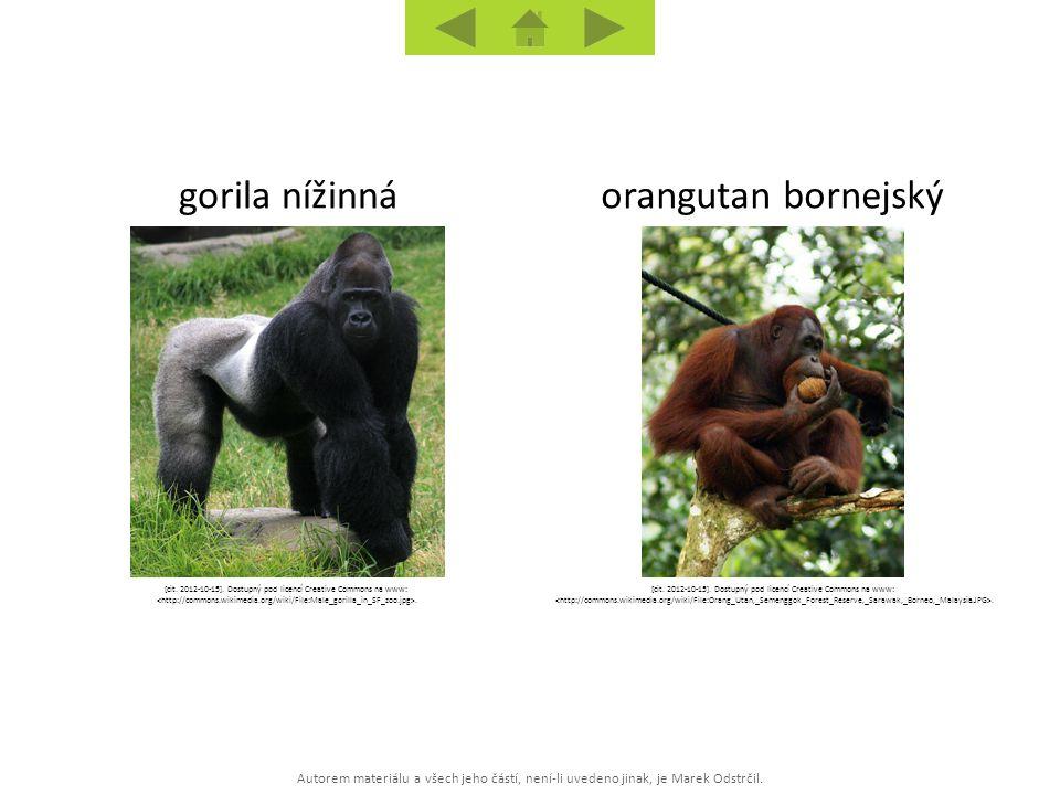 Autorem materiálu a všech jeho částí, není-li uvedeno jinak, je Marek Odstrčil. orangutan bornejskýgorila nížinná [cit. 2012-10-15]. Dostupný pod lice