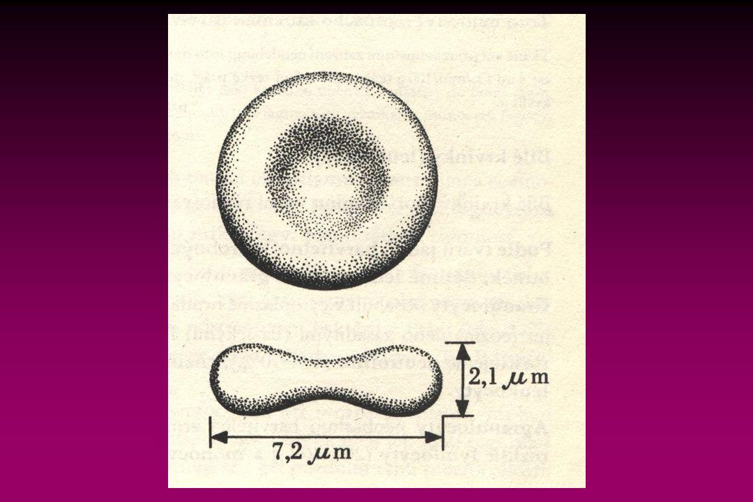 Červené krvinky - erytrocyty bezjaderné buňky (7,2 μm) obsahují hemoglobin přenášející kyslík (15-16g/100ml) počet 4-5 milionů/mm 3 anemie - chudokrevnost Bílé krvinky – leukocyty (5-9 tisíc/mm 3 ) granulocyty neutrofilní (50-70%) eozinofilní (1-9%) bazofilní (0,5%) Krevní elementy