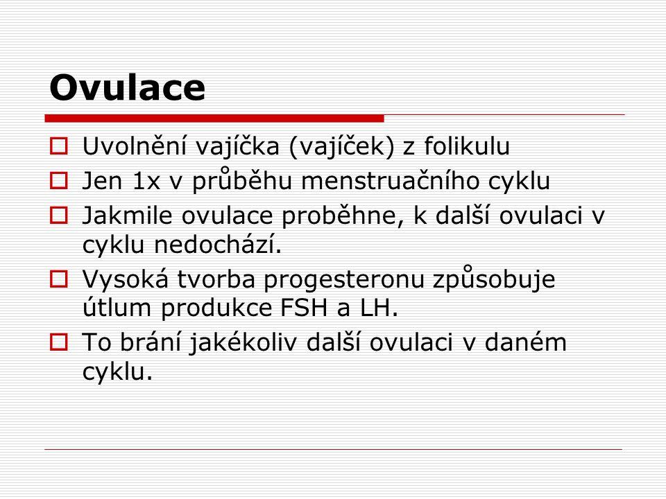 Ovulace  Uvolnění vajíčka (vajíček) z folikulu  Jen 1x v průběhu menstruačního cyklu  Jakmile ovulace proběhne, k další ovulaci v cyklu nedochází.