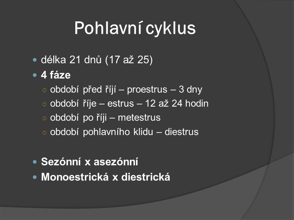 Pohlavní cyklus délka 21 dnů (17 až 25) 4 fáze ○ období před říjí – proestrus – 3 dny ○ období říje – estrus – 12 až 24 hodin ○ období po říji – metes
