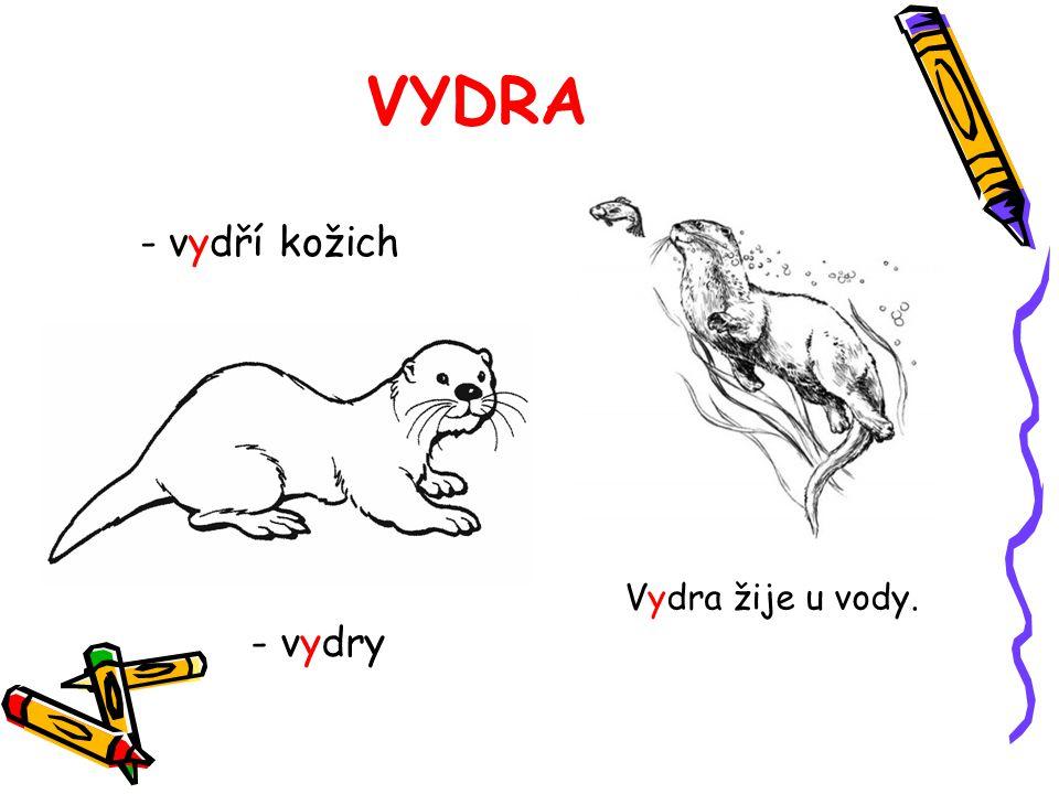 VYDRA - vydří kožich - vydry Vydra žije u vody.